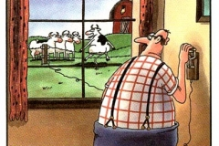 Humor-FS-Cow-ElectricFence