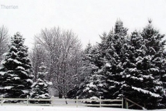 Landscapes-1-9a-WinterTrees2a-AT